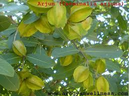 arjuna herb reduce Heart Diseases and Heart Risk Factors