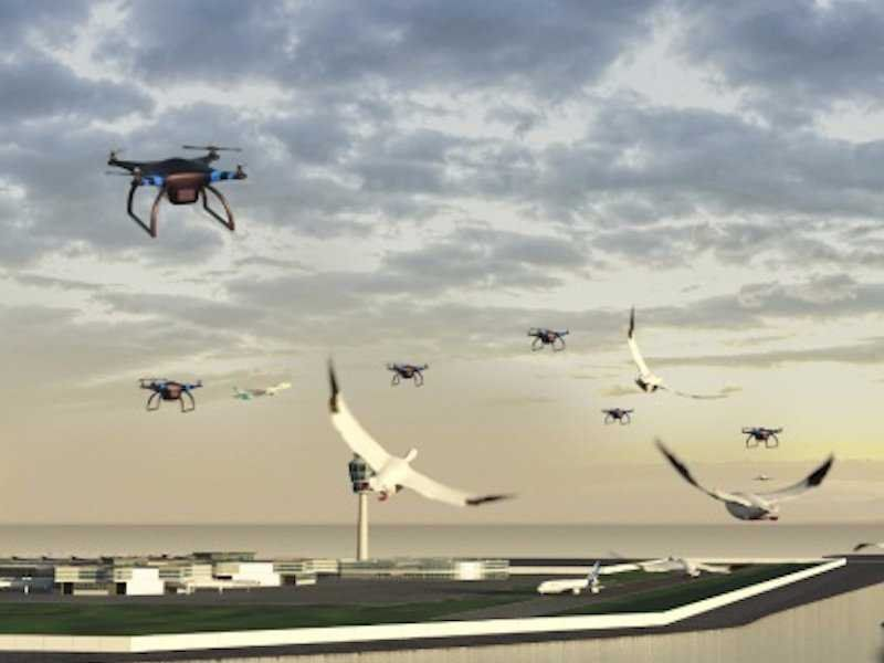 drones and birds port cool invention and inventors of 2015